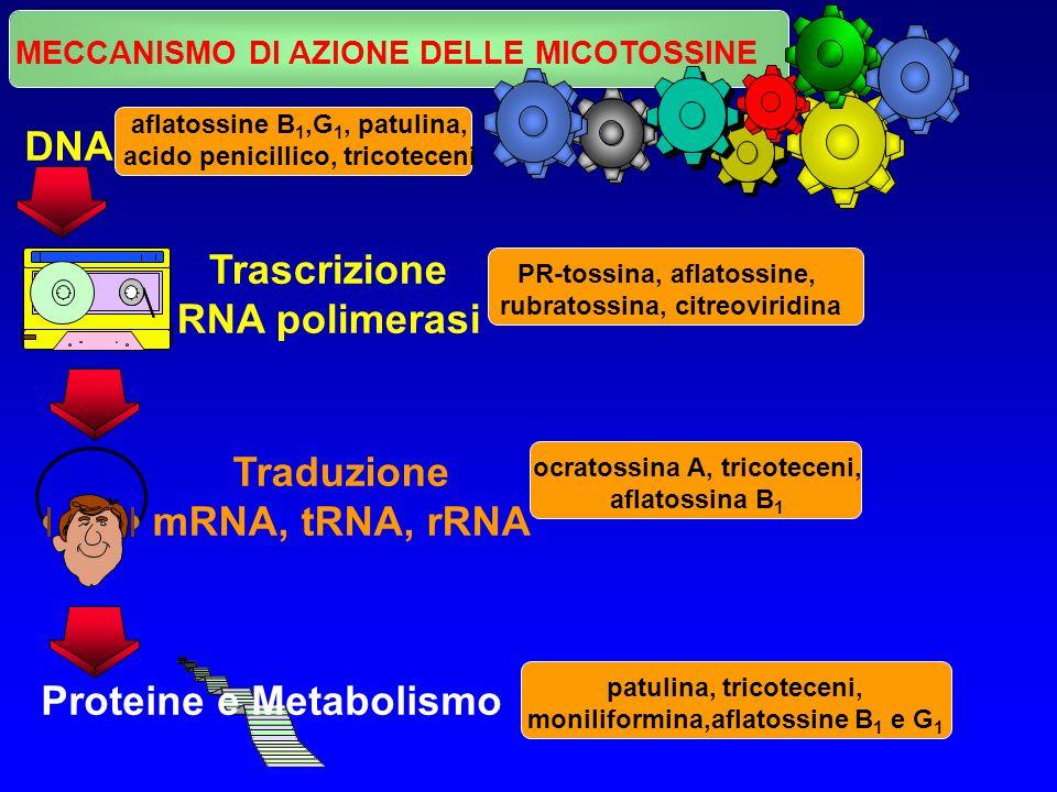 Trascrizione RNA polimerasi Traduzione mRNA, tRNA, rRNA