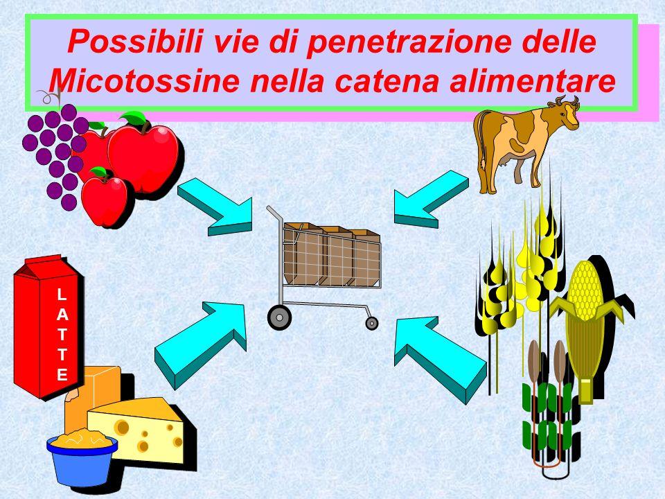 Possibili vie di penetrazione delle Micotossine nella catena alimentare