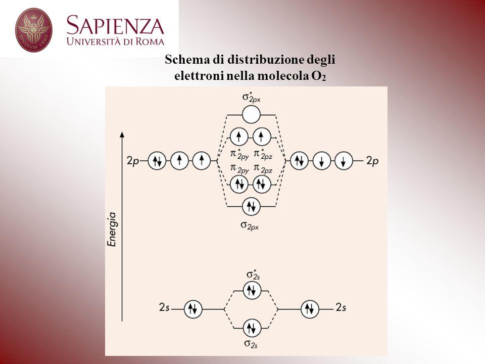 Schema di distribuzione degli elettroni nella molecola O2