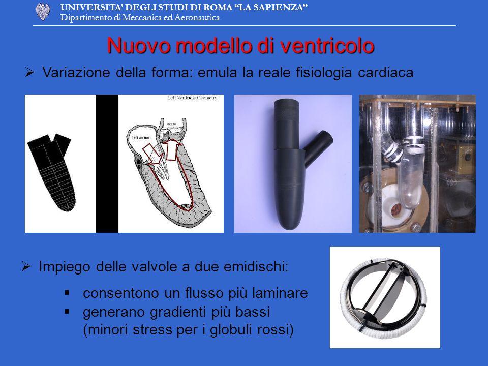 Nuovo modello di ventricolo