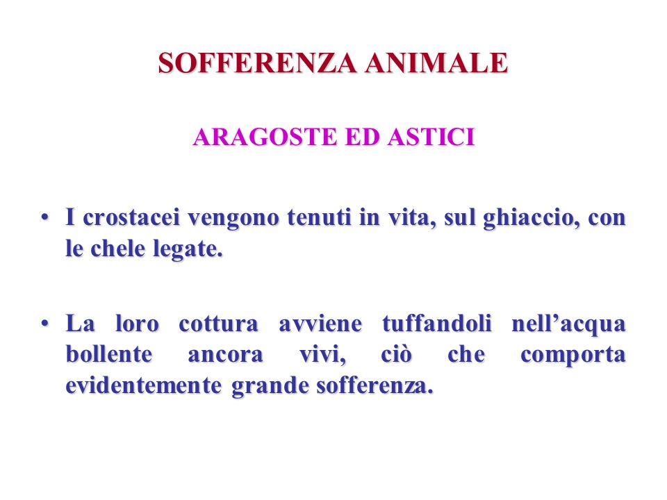SOFFERENZA ANIMALE ARAGOSTE ED ASTICI