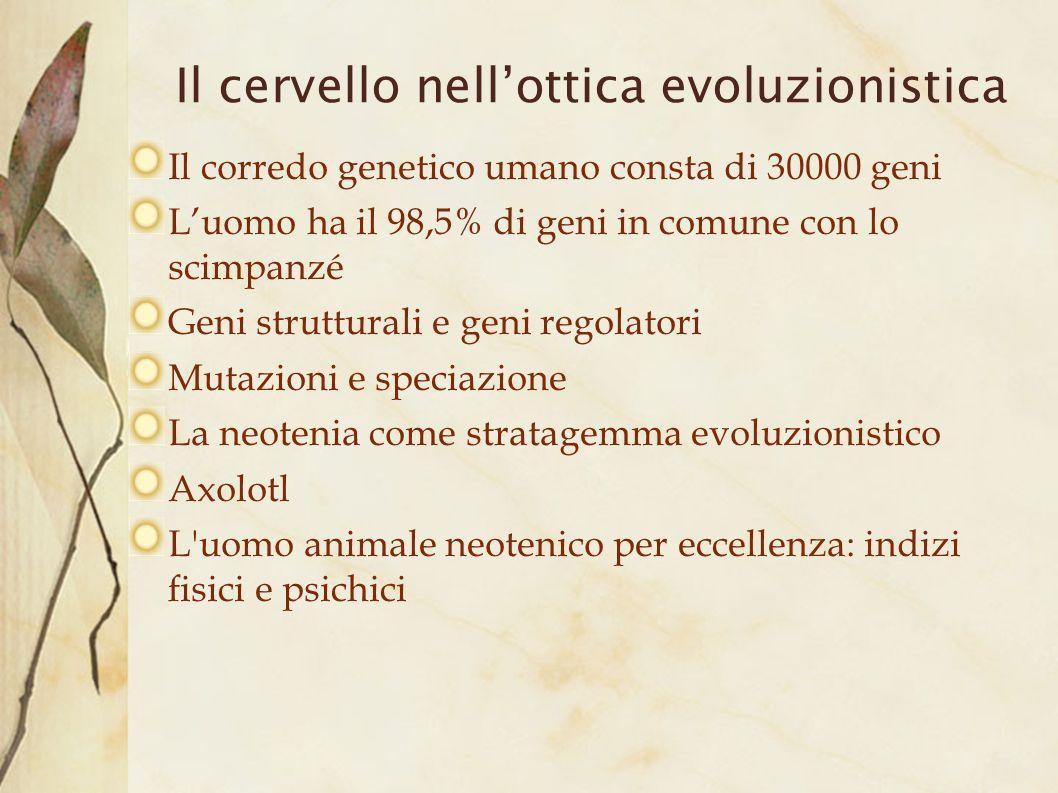 Il cervello nell'ottica evoluzionistica