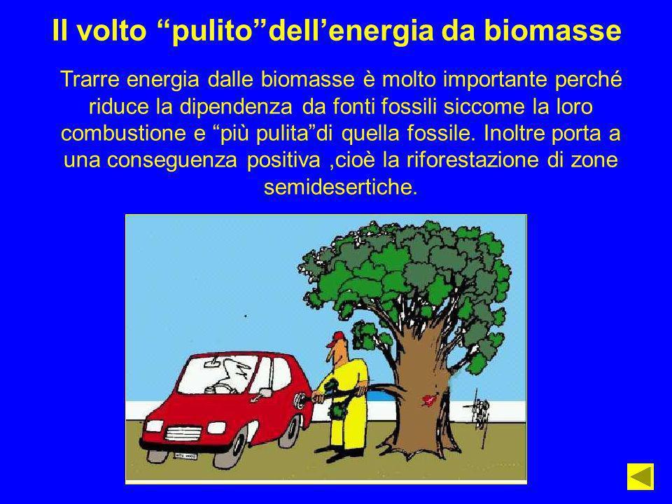 Il volto pulito dell'energia da biomasse