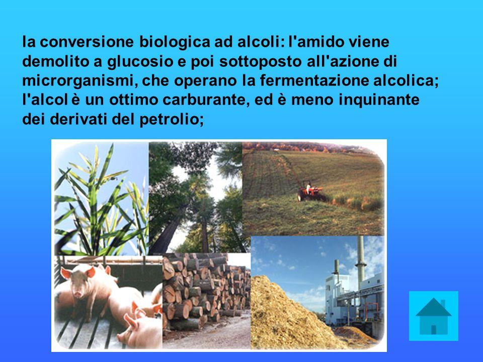la conversione biologica ad alcoli: l amido viene demolito a glucosio e poi sottoposto all azione di microrganismi, che operano la fermentazione alcolica; l alcol è un ottimo carburante, ed è meno inquinante dei derivati del petrolio;