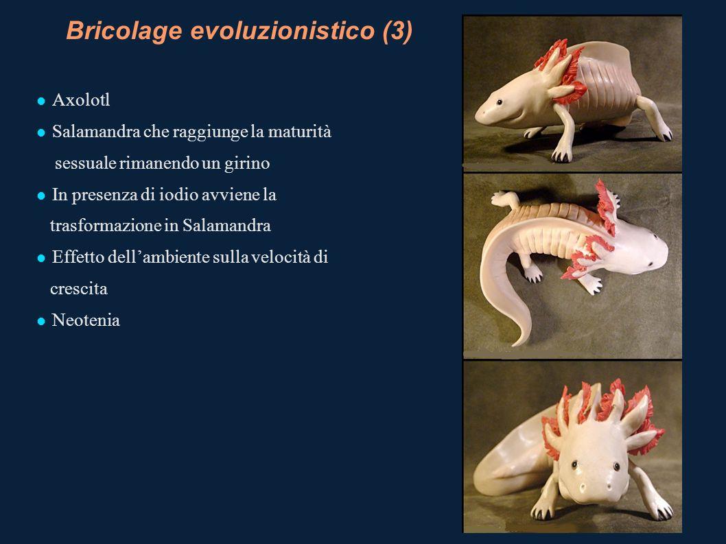 Bricolage evoluzionistico (3)