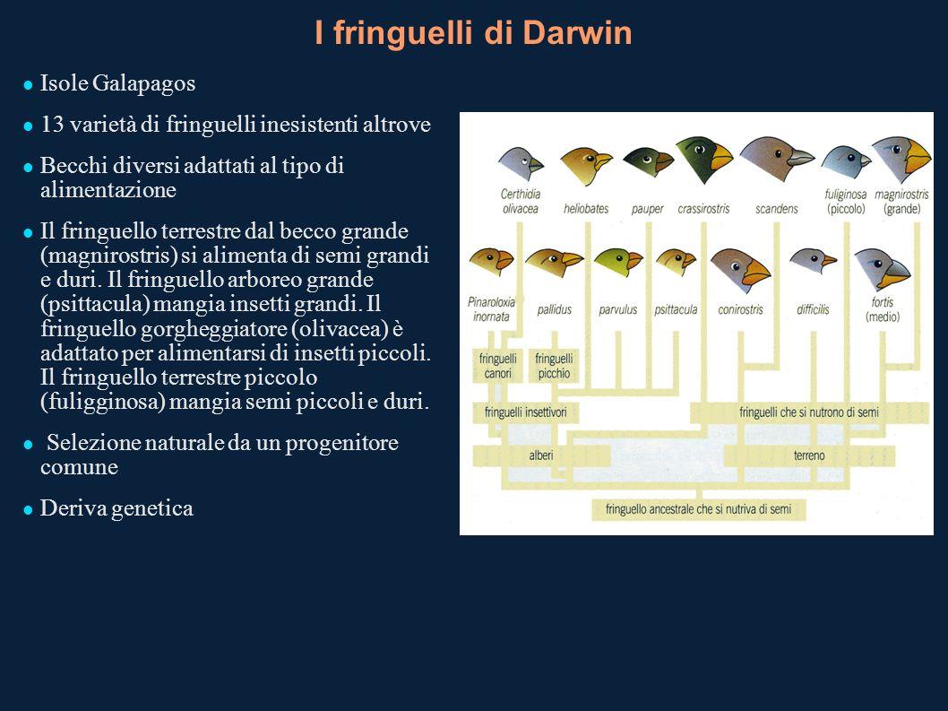 I fringuelli di Darwin Isole Galapagos