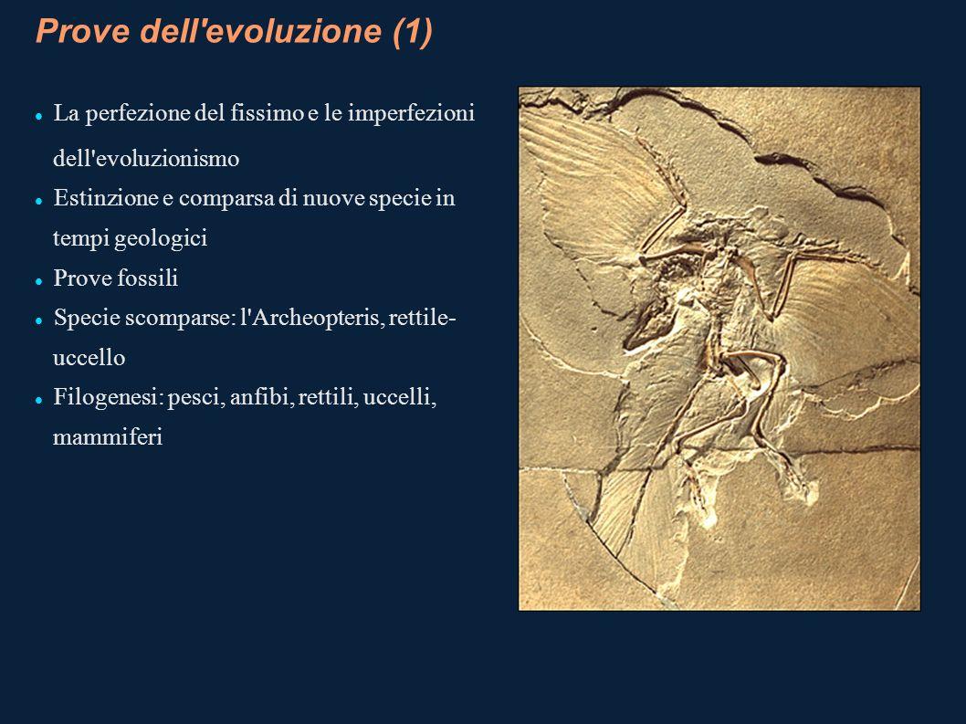 Prove dell evoluzione (1)