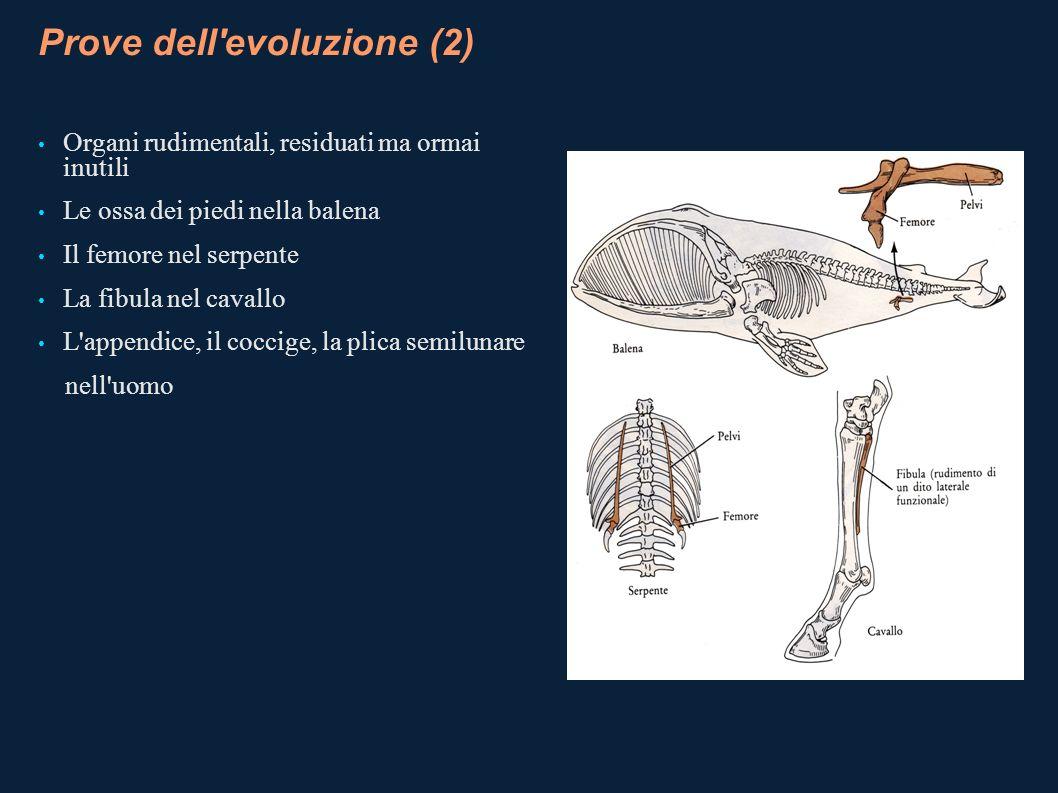 Prove dell evoluzione (2)
