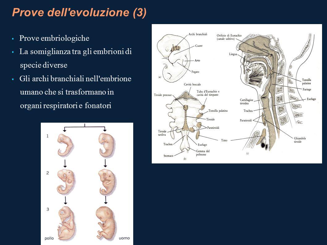 Prove dell evoluzione (3)
