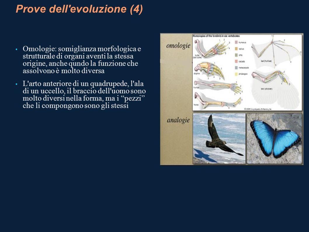 Prove dell evoluzione (4)