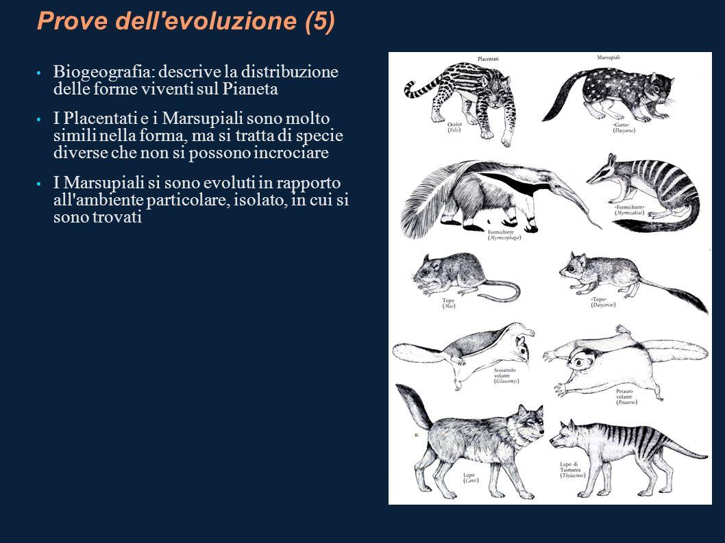 Prove dell evoluzione (5)