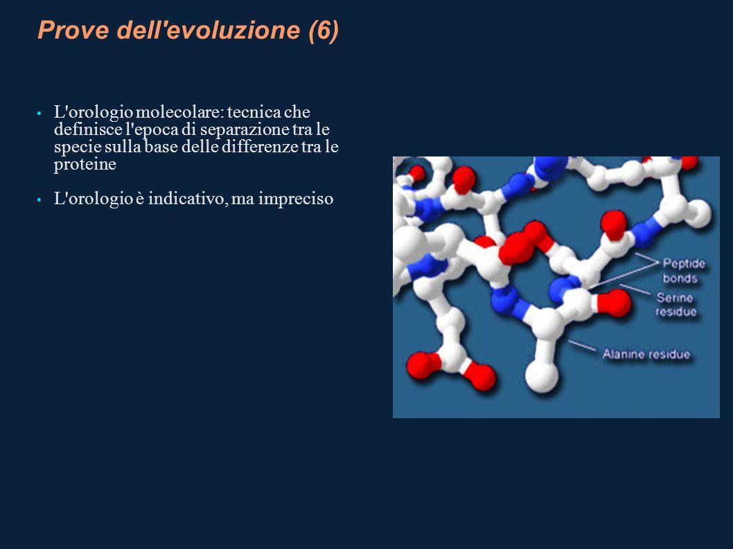 Prove dell evoluzione (6)
