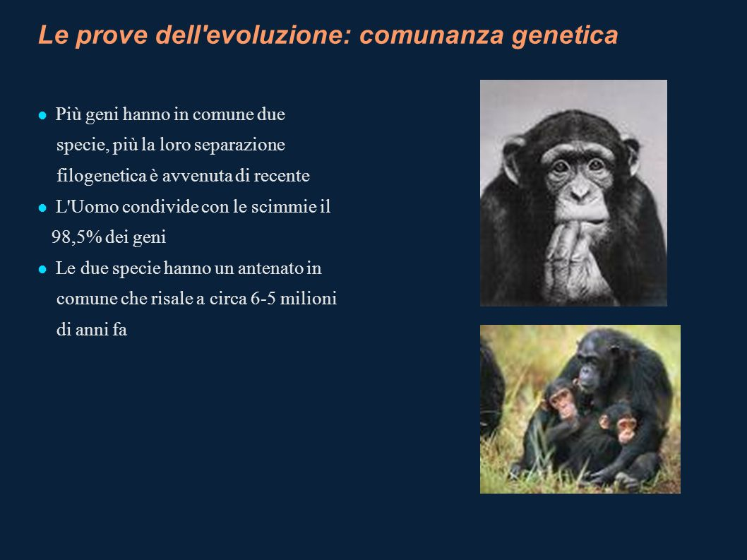 Le prove dell evoluzione: comunanza genetica