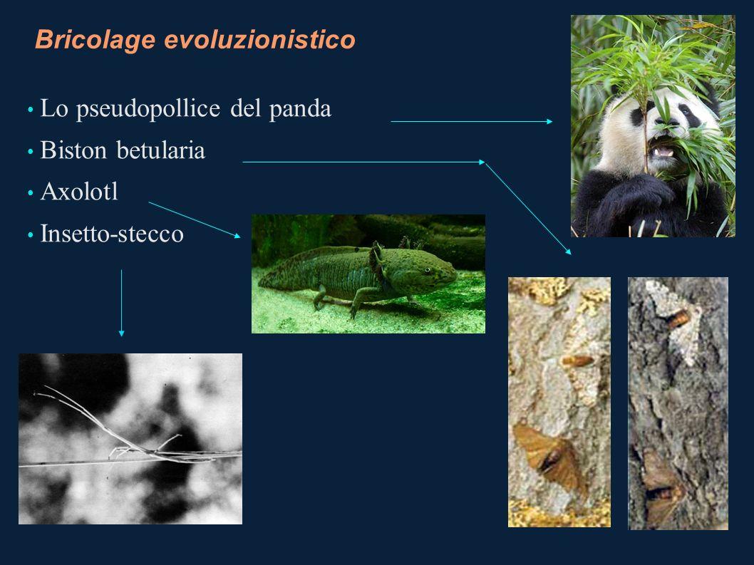 Bricolage evoluzionistico