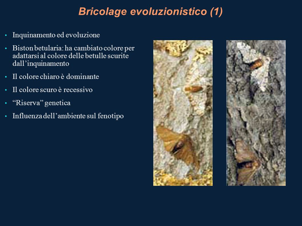 Bricolage evoluzionistico (1)