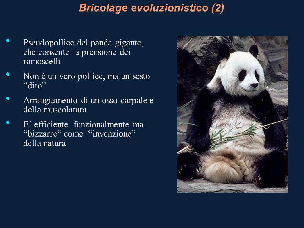 Bricolage evoluzionistico (2)