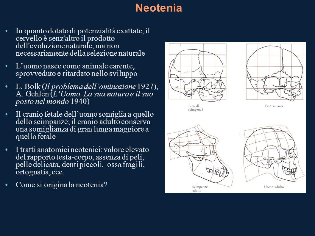 Neotenia