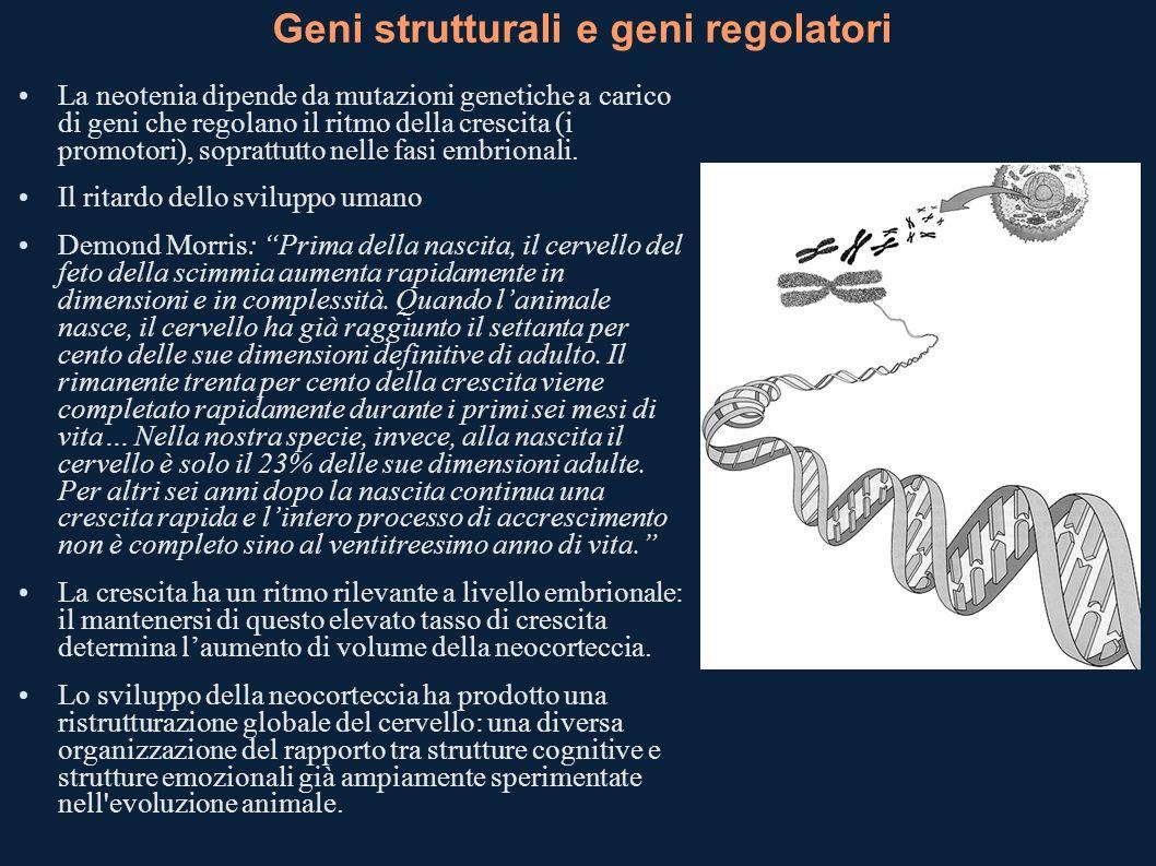 Geni strutturali e geni regolatori