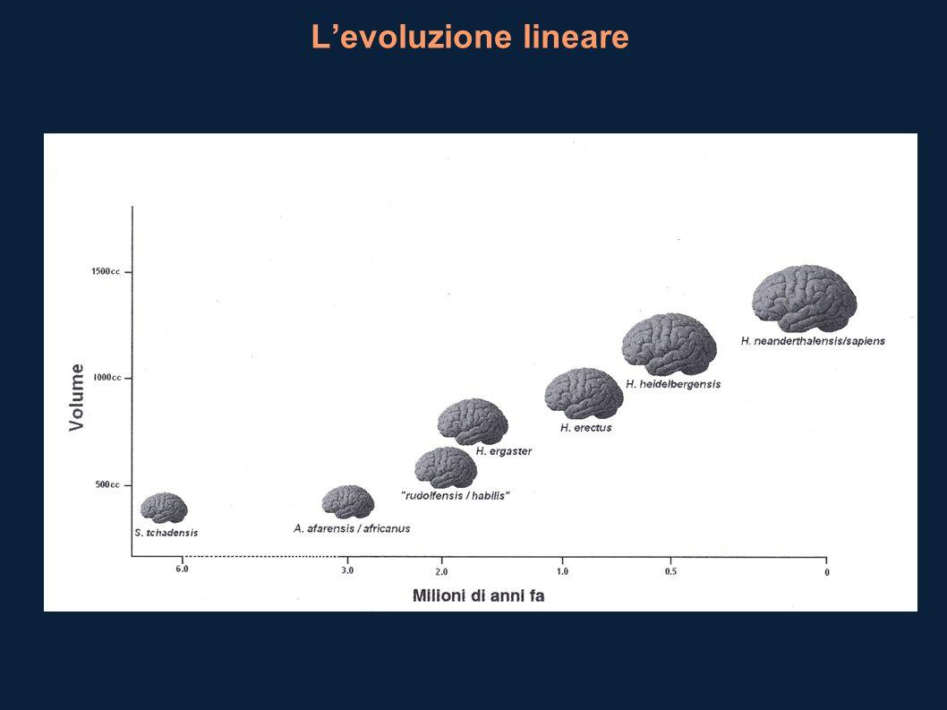 L'evoluzione lineare
