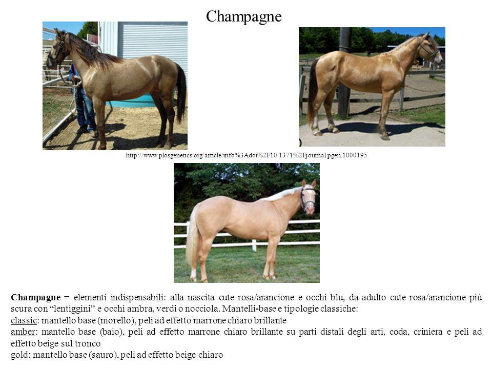Champagne http://www.plosgenetics.org/article/info%3Adoi%2F10.1371%2Fjournal.pgen.1000195.