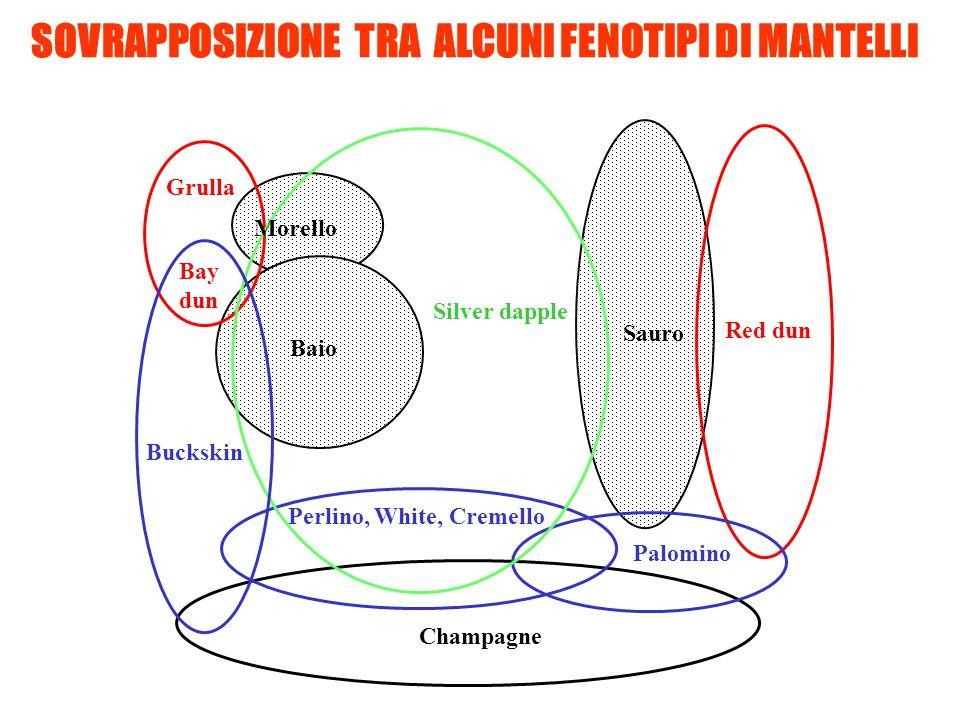SOVRAPPOSIZIONE TRA ALCUNI FENOTIPI DI MANTELLI