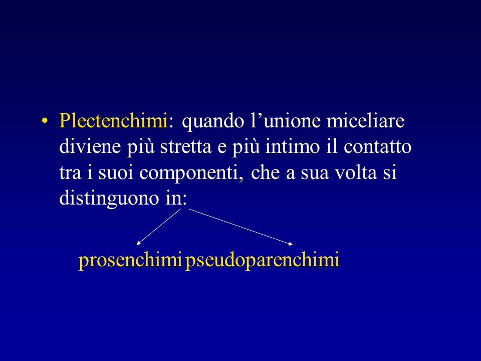 Plectenchimi: quando l'unione miceliare diviene più stretta e più intimo il contatto tra i suoi componenti, che a sua volta si distinguono in: