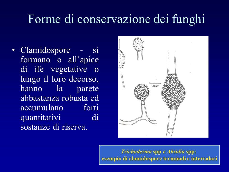 Forme di conservazione dei funghi