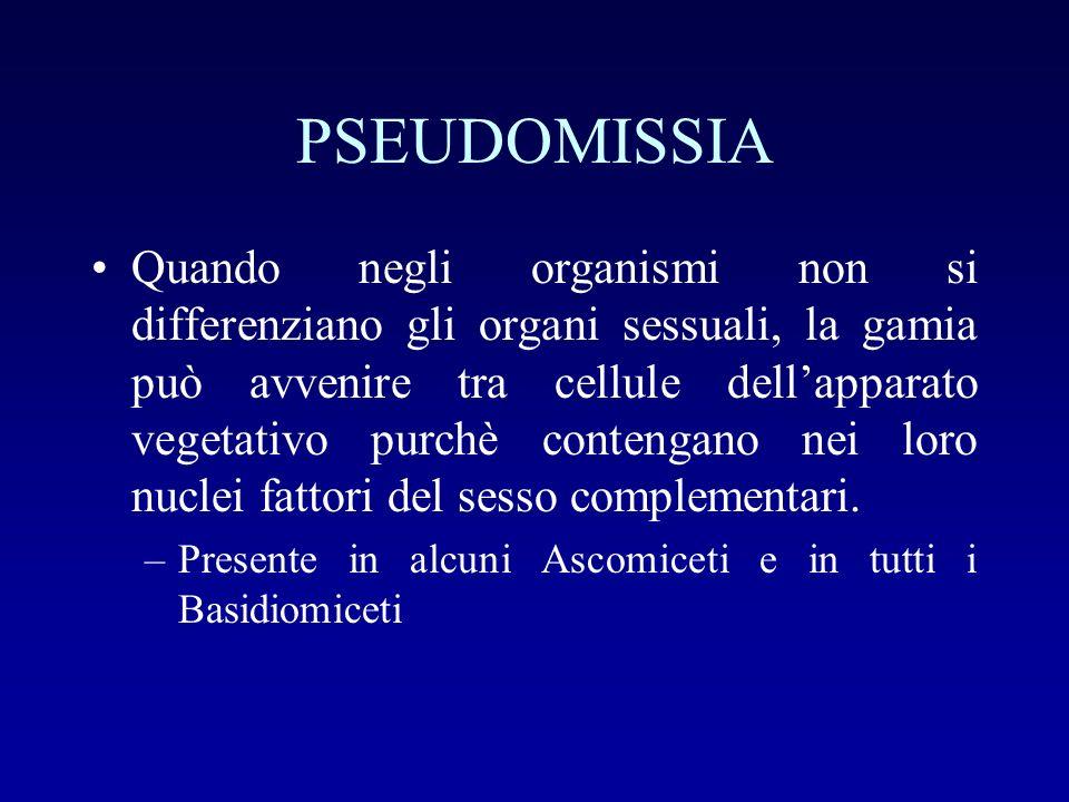 PSEUDOMISSIA