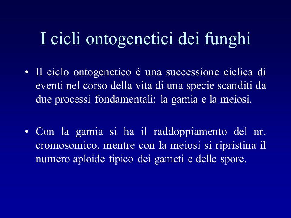 I cicli ontogenetici dei funghi