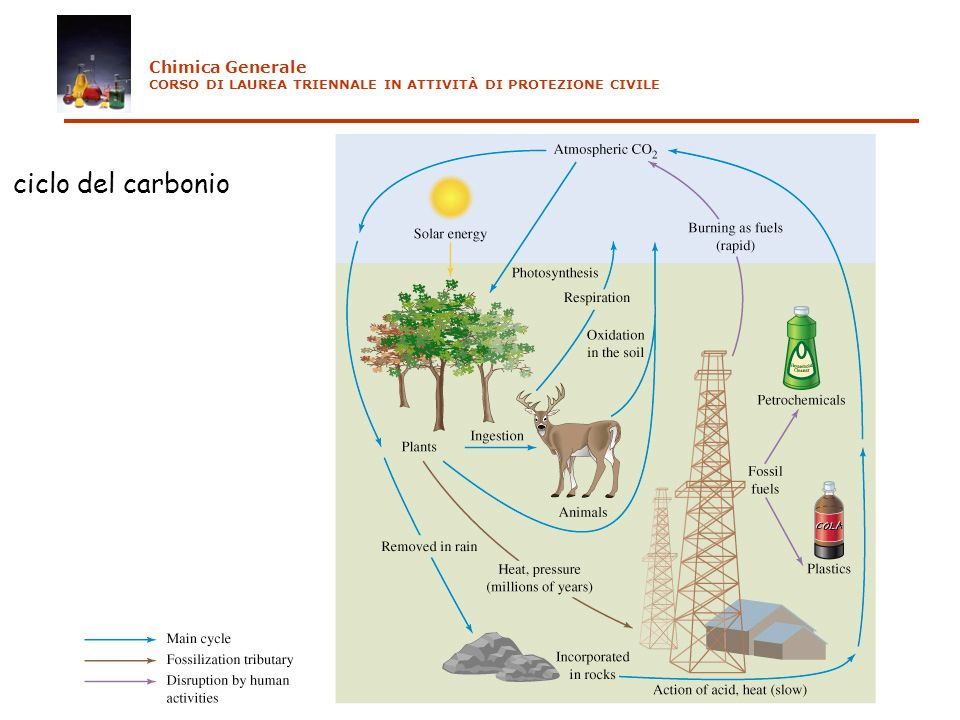 ciclo del carbonio Chimica Generale