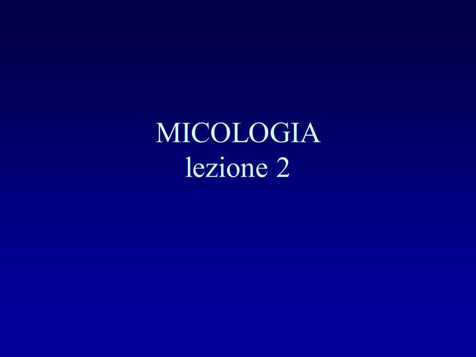 MICOLOGIA lezione 2