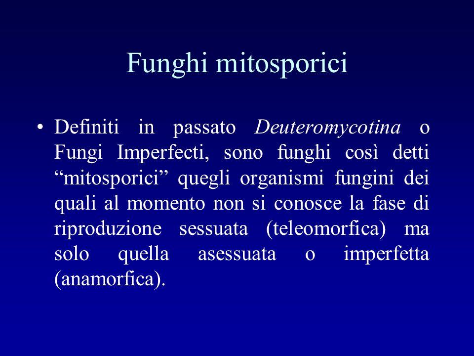 Funghi mitosporici
