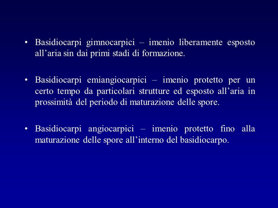 Basidiocarpi gimnocarpici – imenio liberamente esposto all'aria sin dai primi stadi di formazione.