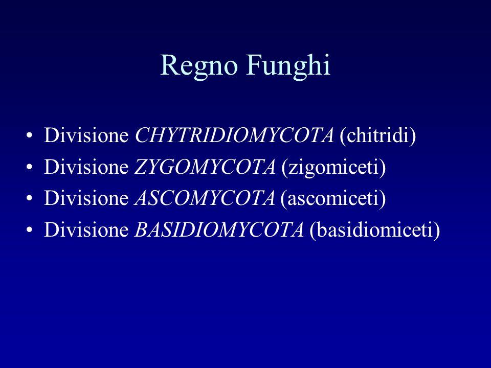 Regno Funghi Divisione CHYTRIDIOMYCOTA (chitridi)