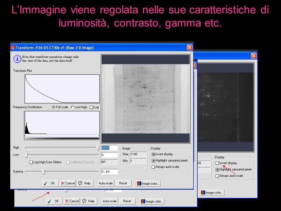 L'Immagine viene regolata nelle sue caratteristiche di luminosità, contrasto, gamma etc.