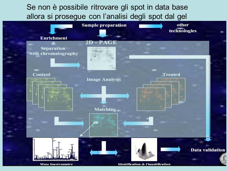 Se non è possibile ritrovare gli spot in data base allora si prosegue con l'analisi degli spot dal gel
