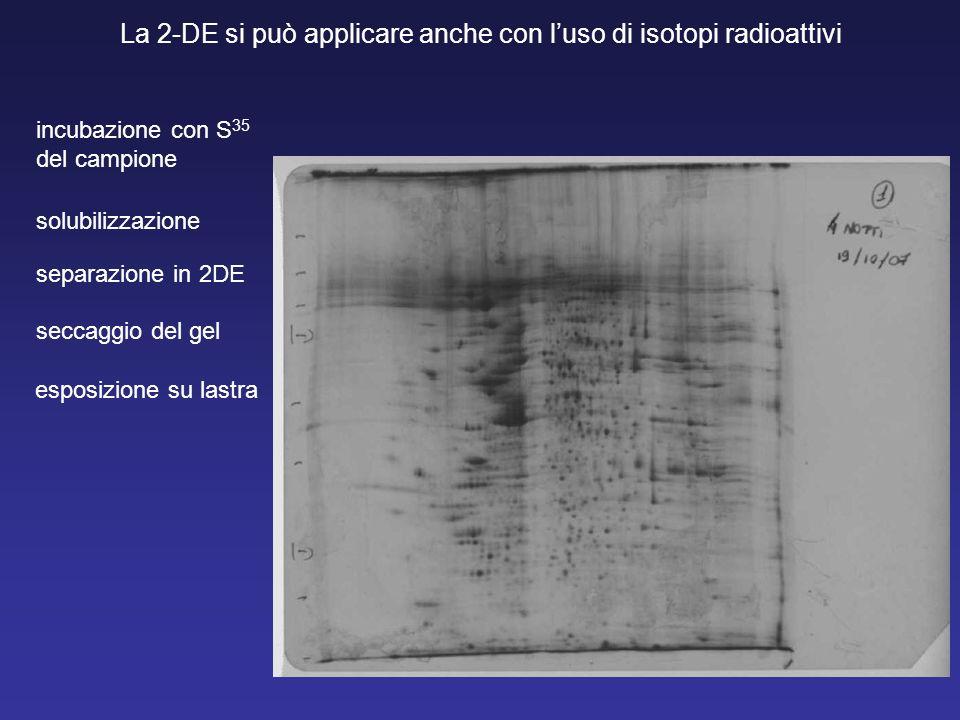 La 2-DE si può applicare anche con l'uso di isotopi radioattivi