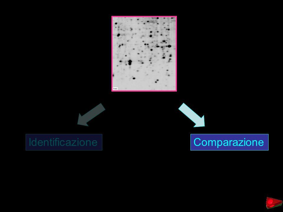 Identificazione Comparazione