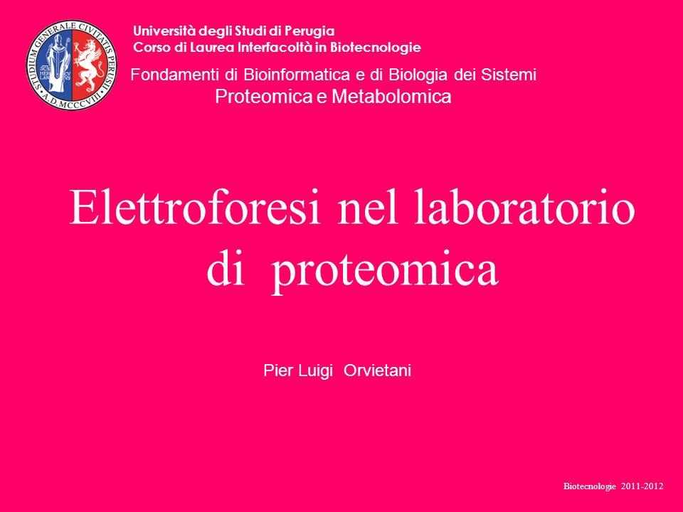 Elettroforesi nel laboratorio di proteomica