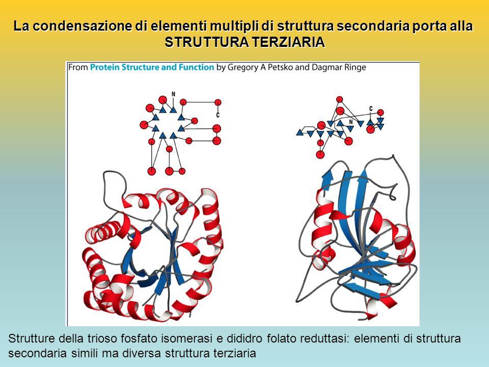 La condensazione di elementi multipli di struttura secondaria porta alla