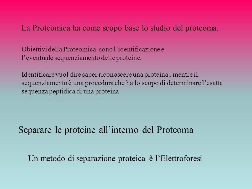 Separare le proteine all'interno del Proteoma