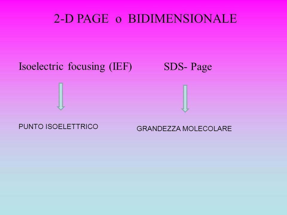 2-D PAGE o BIDIMENSIONALE
