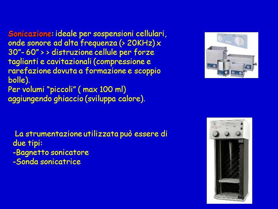 Sonicazione: ideale per sospensioni cellulari, onde sonore ad alta frequenza (> 20KHz) x 30 - 60 > > distruzione cellule per forze taglianti e cavitazionali (compressione e rarefazione dovuta a formazione e scoppio bolle).