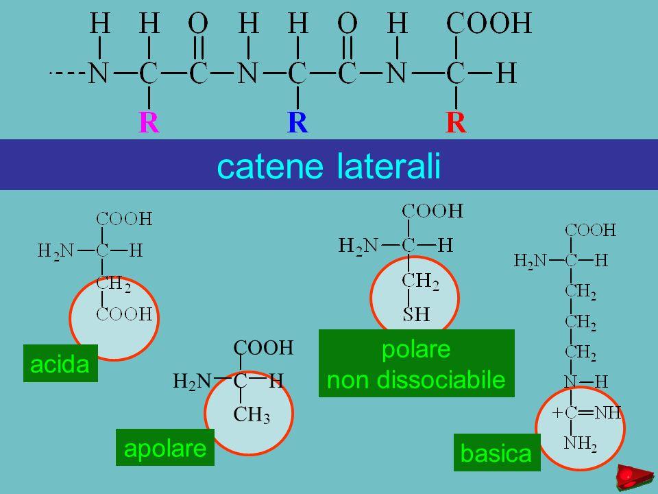 catene laterali polare acida non dissociabile apolare basica C O H N 2