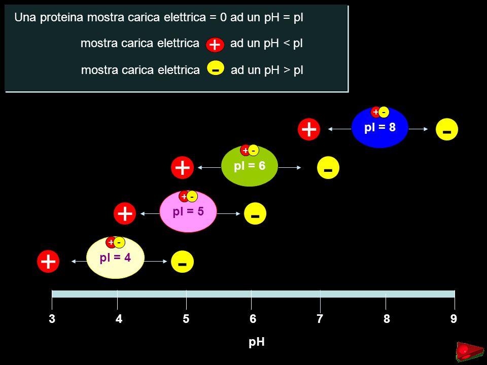 + - - + Una proteina mostra carica elettrica = 0 ad un pH = pI