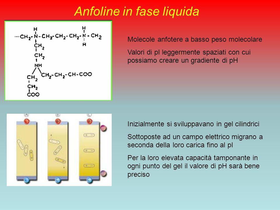 Anfoline in fase liquida
