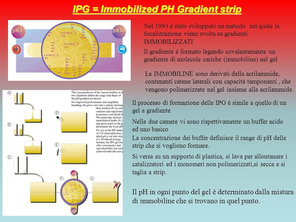 IPG = Immobilized PH Gradient strip