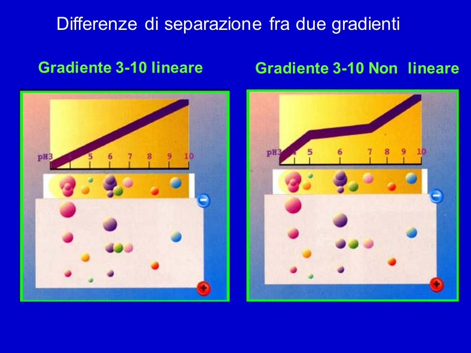 Differenze di separazione fra due gradienti