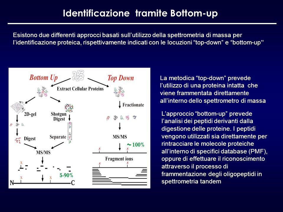 Identificazione tramite Bottom-up