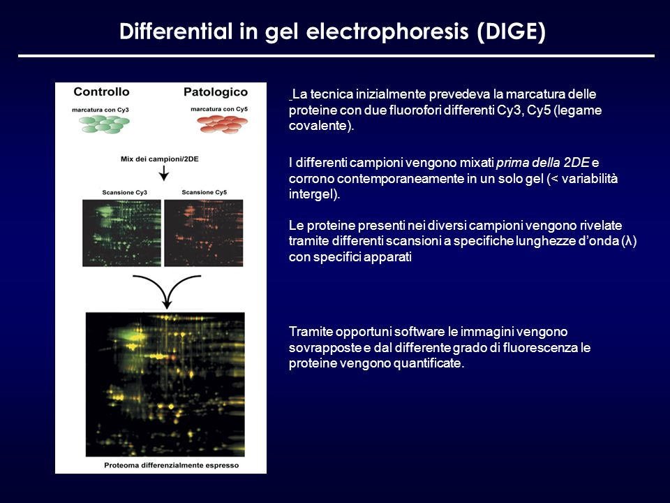 Differential in gel electrophoresis (DIGE)
